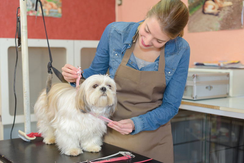 pet groomer insurance