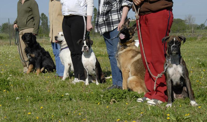 dog training insurance